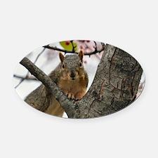 Unique Wildlife fox Oval Car Magnet