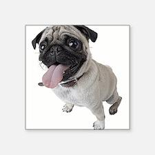 Pug Close Up Photo Sticker