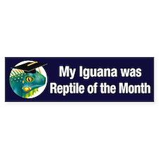 Iguana of the Month Bumper Bumper Sticker