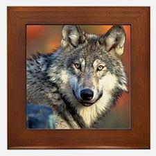 Wolf Photograph Framed Tile