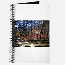 a walk down the forest path in fall Journal