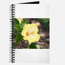 Pale yellow hibiscus flower 2 Journal