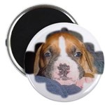"CUTE DOG 2.25"" Magnet (10 pack)"