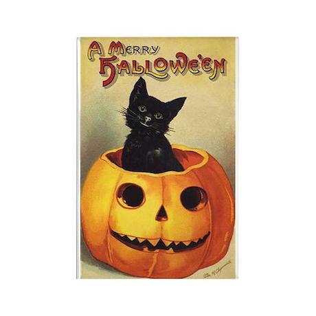Cat in Pumpkin Rectangle Magnet