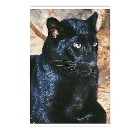 Black Leopard Portrait Postcards (Package of 8)