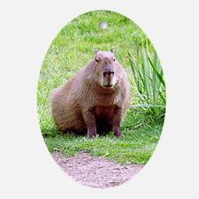 Capybara Looking Forward Oval Ornament