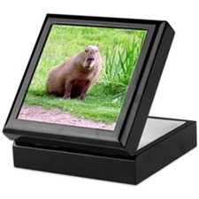 Capybara Looking Forward Keepsake Box