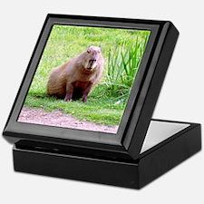 Capybara Looking Forward Keepsake Box