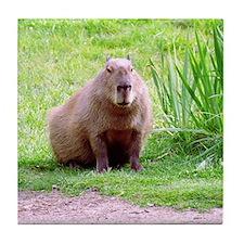 Capybara Looking Forward Tile Coaster