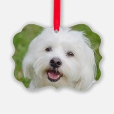 Unique Coton de tulear Ornament