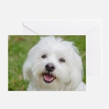 Cool Coton de tulear Greeting Card