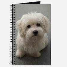 coton de tulear puppy Journal