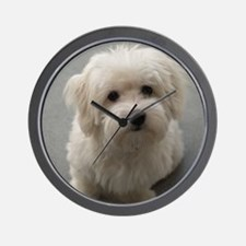 coton de tulear puppy Wall Clock