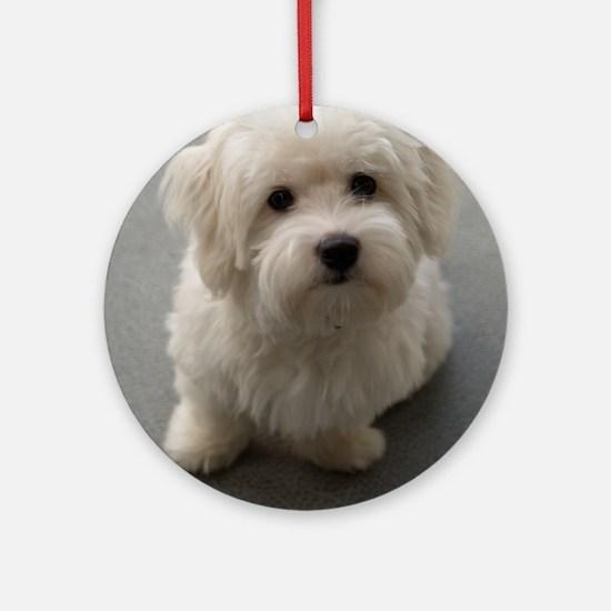 coton de tulear puppy Round Ornament