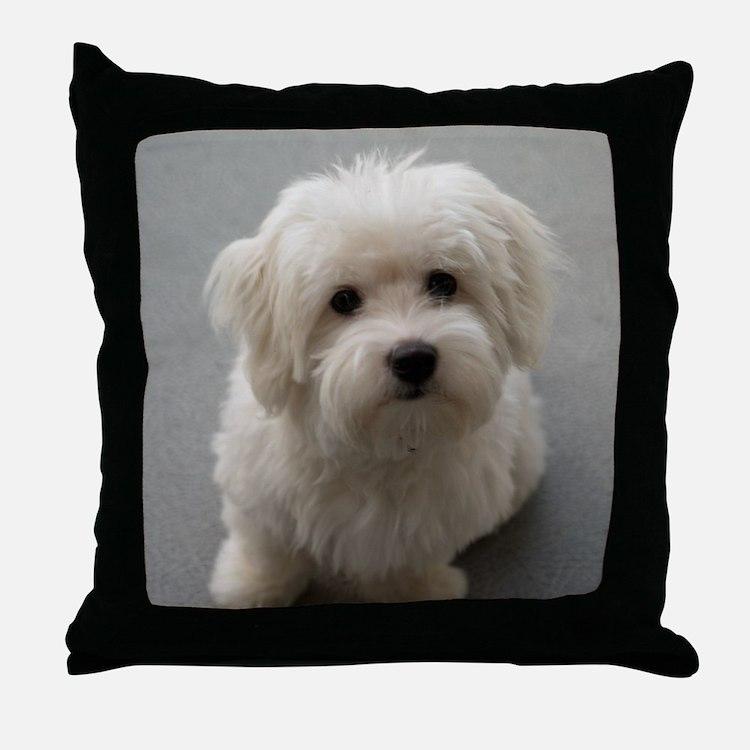 coton de tulear puppy Throw Pillow