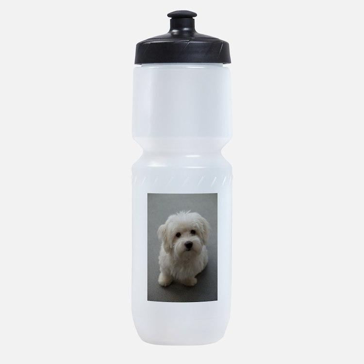 coton de tulear puppy Sports Bottle