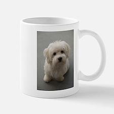 coton de tulear puppy Mugs