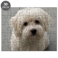 coton de tulear puppy Puzzle