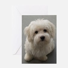 coton de tulear puppy Greeting Cards