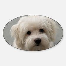 coton de tulear puppy Decal