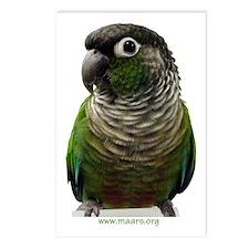 Green-Cheek Conure Postcards (8)