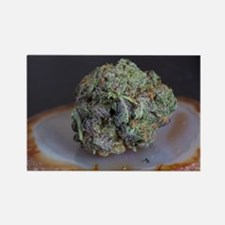 Grape Ape Medicinal Marijuana Magnets