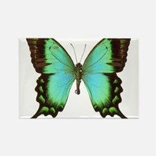 Cute Butterfly Rectangle Magnet