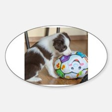 Cool Border collie puppies Decal
