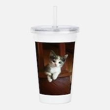 Adorable Calico Kitten Acrylic Double-wall Tumbler