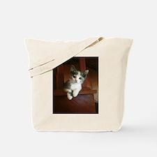 Adorable Calico Kitten Tote Bag