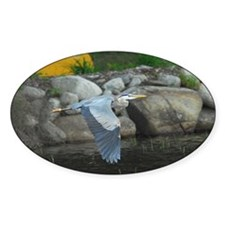 Great Blue Heron Oval Decal