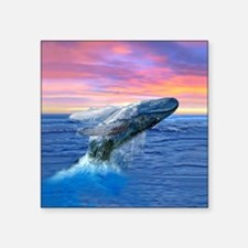 Humpback Whale Breaching at Sunset Sticker