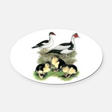 Muscovy Ducks Black Pied Oval Car Magnet