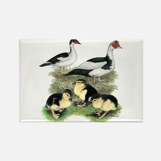 Muscovy Ducks Black Pied Magnets