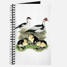 Muscovy Ducks Black Pied Journal