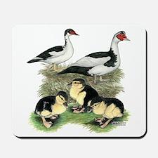 Muscovy Ducks Black Pied Mousepad