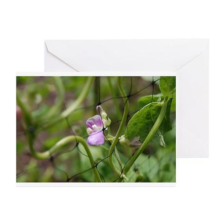 Bean Flower Blank Greeting Cards (Pk of 10)