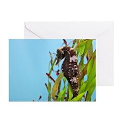photoart Greeting Cards (Pk of 20)