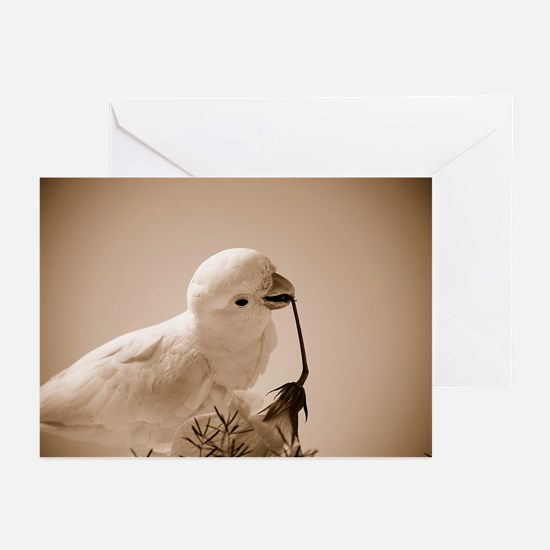 Parrot in Sepia Greeting Cards (Pk of 10)