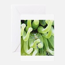 Cleaner Shrimp and Green Sea Anemone Greeting Card