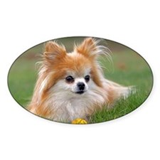 Cute Pomeranian Dog Decal