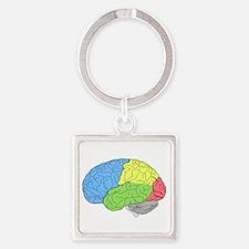 Primary Brain Keychains