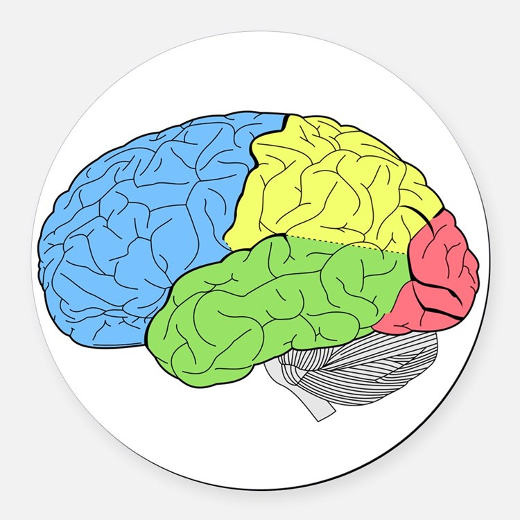 Primary Brain Round Car Magnet