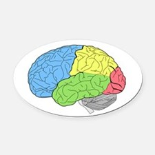 Primary Brain Oval Car Magnet