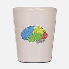 Primary Brain Shot Glass
