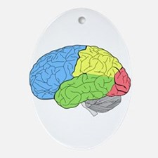 Primary Brain Oval Ornament