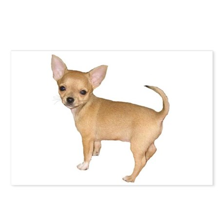 Chihuahua Short Hair Dogs Postcards (Package of 8)
