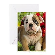 Cute English Bulldog Puppy Greeting Cards