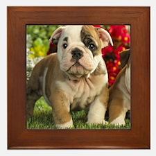 Cute English Bulldog Puppy Framed Tile