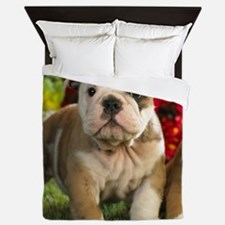 Cute English Bulldog Puppy Queen Duvet
